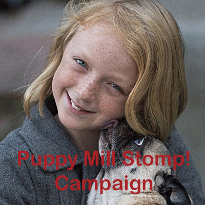 Buster's Vision Buster's Vision Registry Puppy Mill Stomp