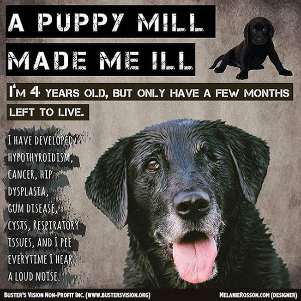 Buster's Vision Puppy Mill Poster